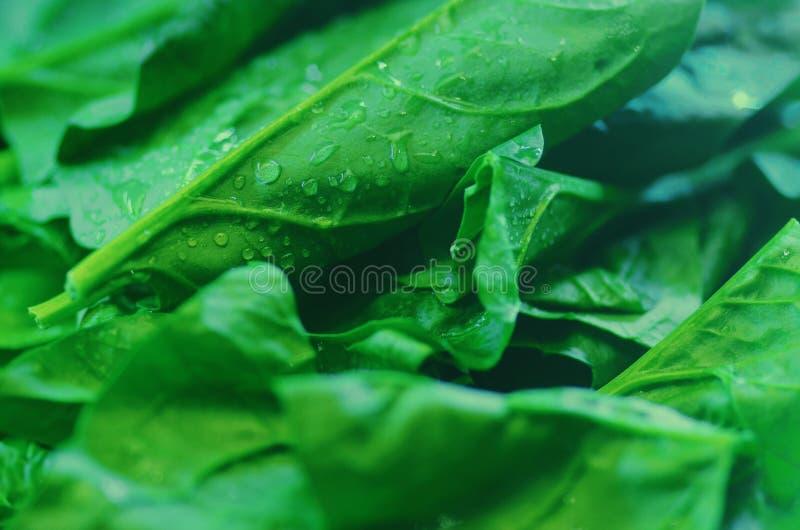 nourriture fraîche de vegetable photos stock