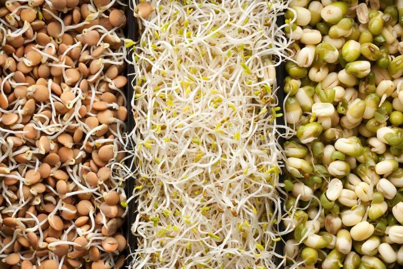 Nourriture macrobiotique photos libres de droits