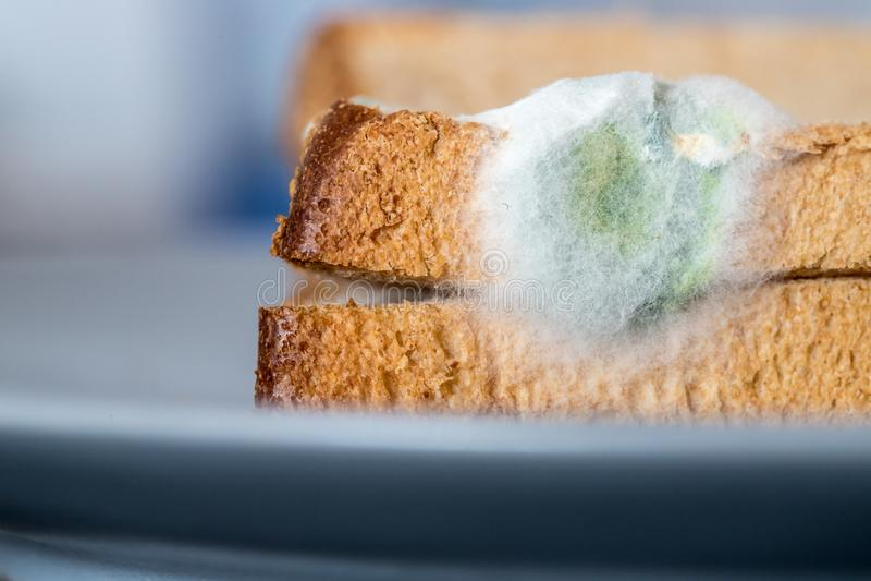 Nourriture putr?fi?e : Tranches moisies de pain grill? d'un plat photos stock