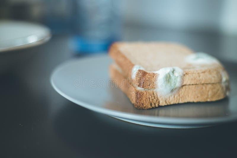 Nourriture putr?fi?e : Tranches moisies de pain grill? d'un plat photo libre de droits