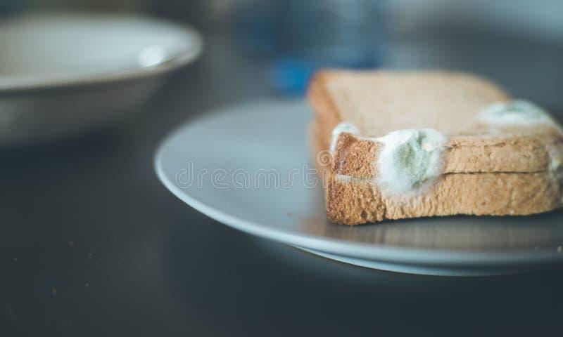Nourriture putr?fi?e : Tranches moisies de pain grill? d'un plat photographie stock libre de droits