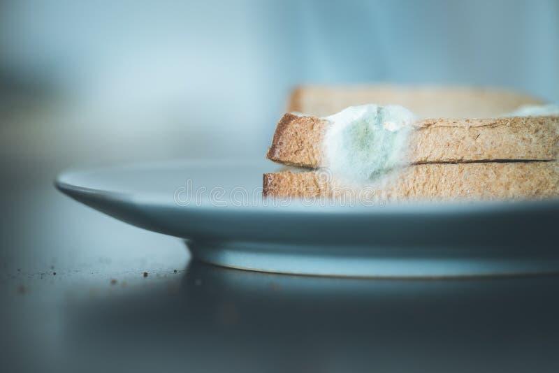 Nourriture putr?fi?e : Tranches moisies de pain grill? d'un plat photo stock