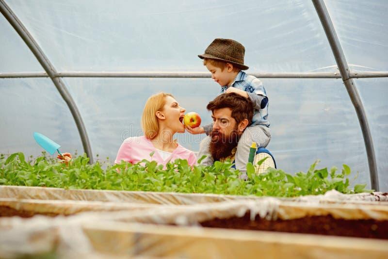 Nourriture saine Concept sain de nourriture famille heureuse cultivant la nourriture saine nourriture saine pour la belle m?re co photo libre de droits
