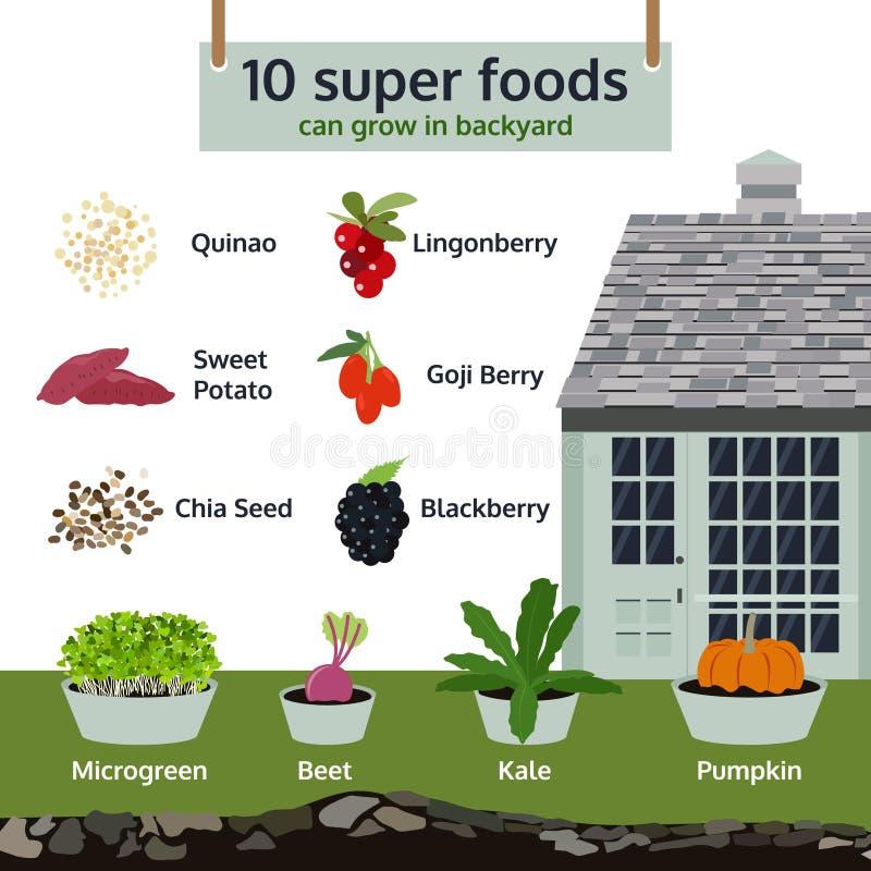 10 nourritures superbes peuvent se développer dans l'arrière-cour, vecteur infographic de nourriture illustration stock