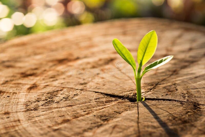 Nouveau concept de la vie avec l'arbre croissant de pousse de jeune plante image libre de droits