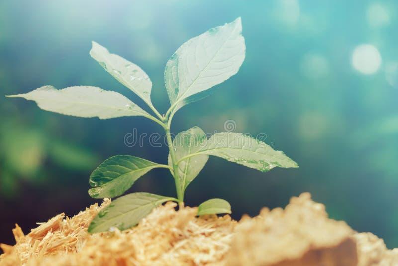 Nouveau concept de la vie avec l'arbre croissant de pousse de jeune plante Idée de symbole de développement des affaires photographie stock libre de droits