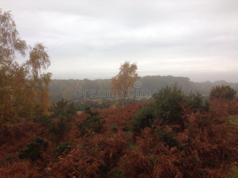 Nouveau Forest Skyline images stock