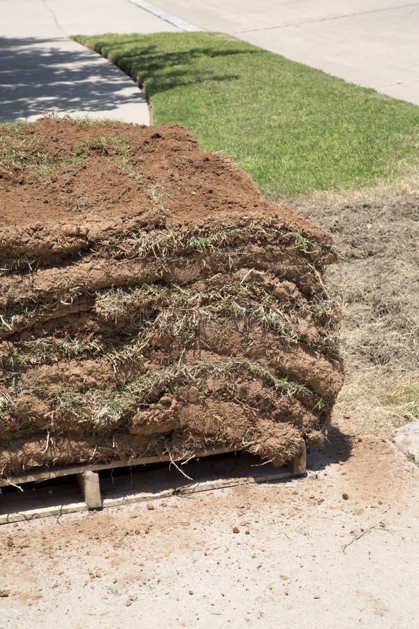 Nouveau gazon de pelouse photographie stock