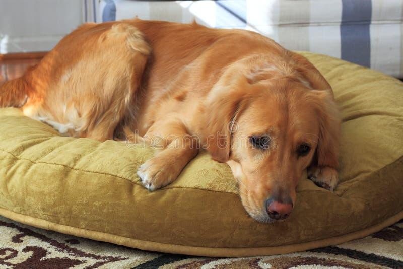 Nouveau lit de chien images stock
