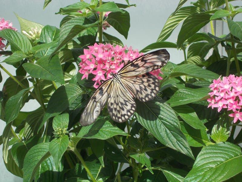 Nouveau papillon photographie stock