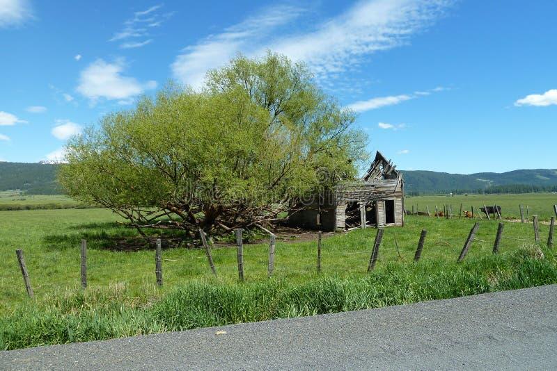 Nouveaux prés, grange historique de l'Idaho photographie stock libre de droits