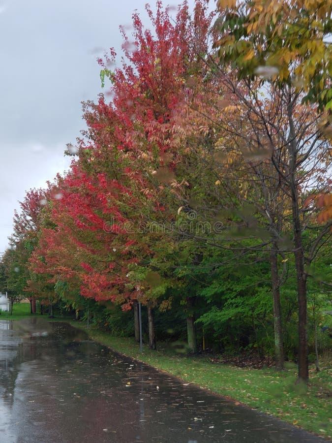 Nouvelles couleurs d'automne images stock