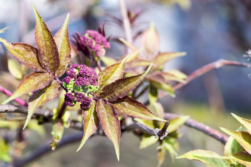 Nouvelles fleurs de floraison sur une branche d'arbre image stock