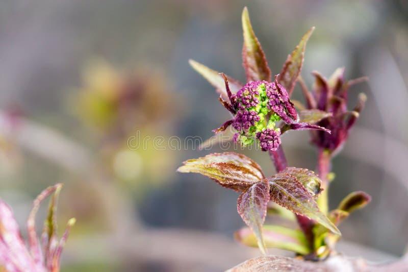 Nouvelles fleurs de floraison sur une branche d'arbre photographie stock libre de droits