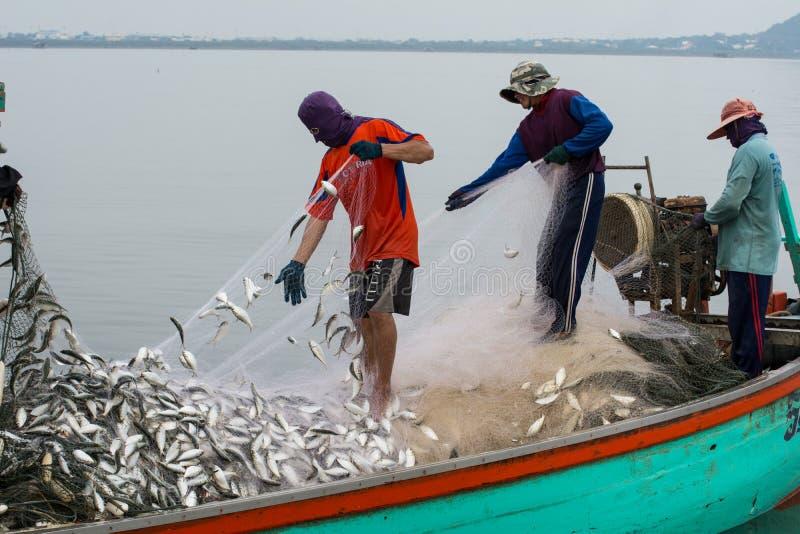 NOV. 5,2016: Auf dem Fischerboot viele Fische am Mund von Bangpakong-Fluss in Chachengsao-Provinz östlich von Thailand fangend stockfotos