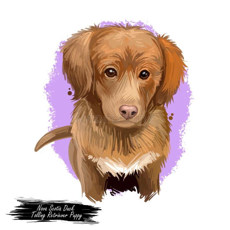 Free Nova Scotia Duck Tolling Retriever Puppy Canadian Pet Digital Art Royalty Free Stock Photos - 159816548