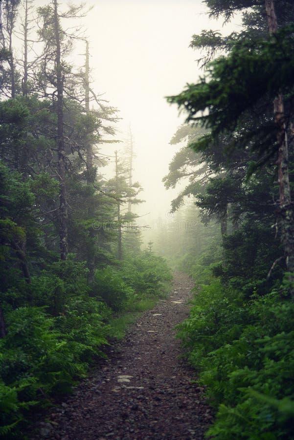 Nova Scotia Mist image stock