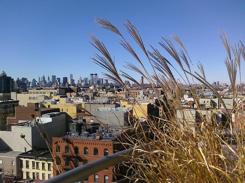 Nova York Skyline View from Brooklyn Roof with Wheat in Foreground foto de stock royalty free