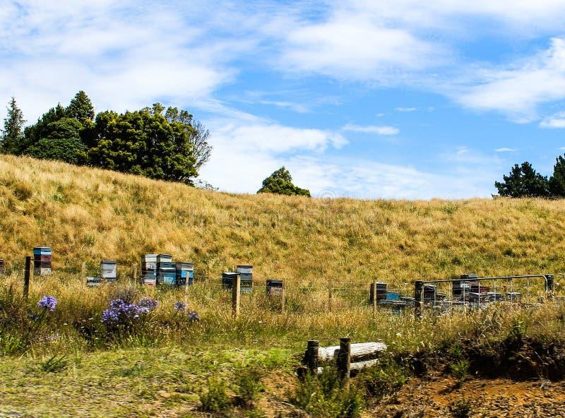 Nova Zelândia no verão fotos de stock royalty free