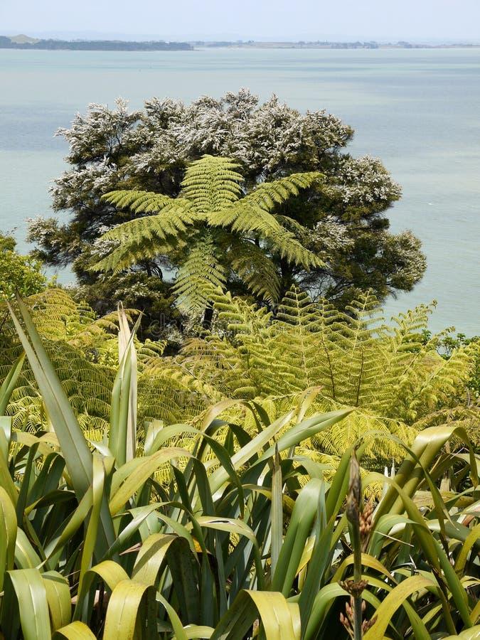 Nova Zel?ndia: plantas nativas do jardim do beira-mar imagem de stock