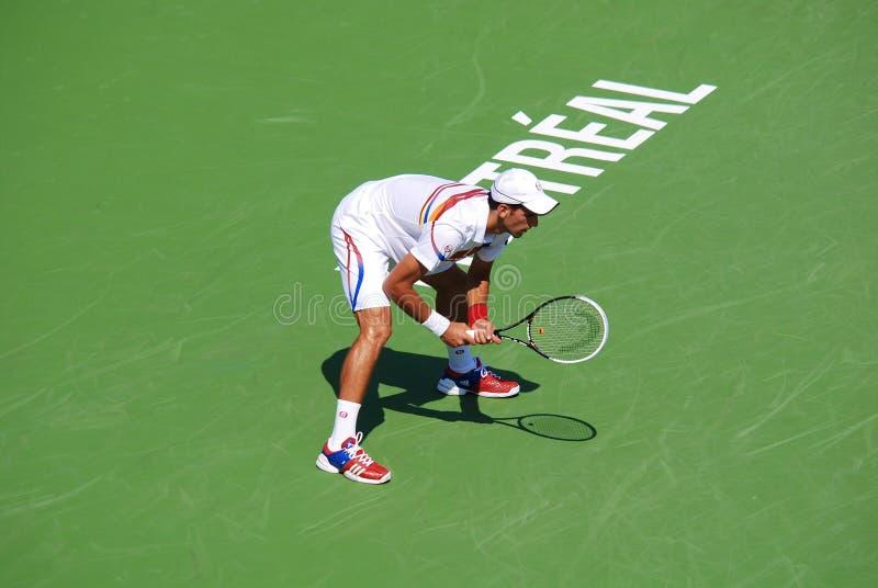 Novack Djokovic zdjęcia royalty free