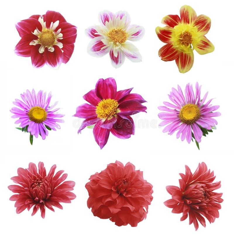 Nove fiori immagine stock