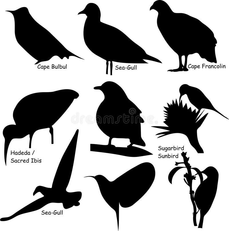 Nove formas do pássaro ilustração stock