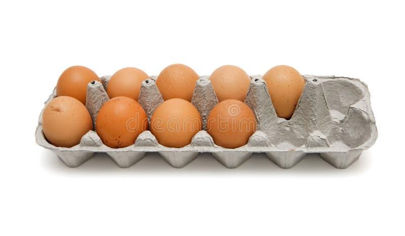 Nove ovos marrons na caixa isolada fotos de stock royalty free