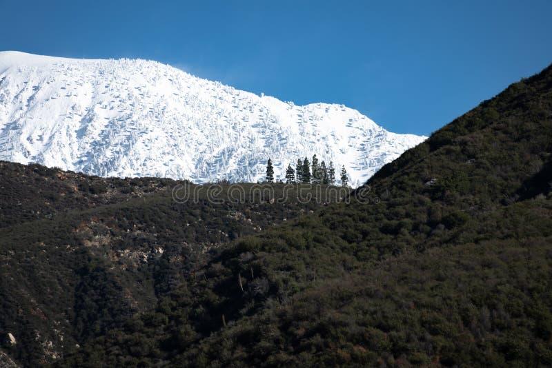 Nove pini alla linea di neve fotografia stock