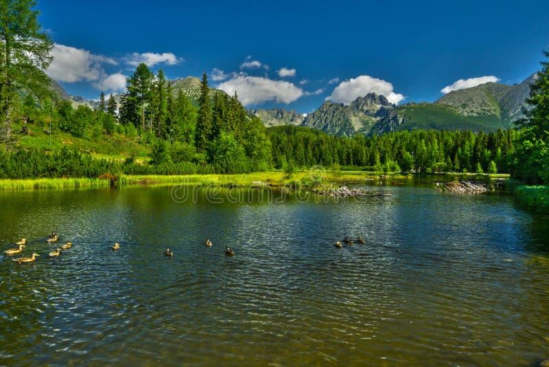 Nove Strbske pleso lake royalty free stock photos