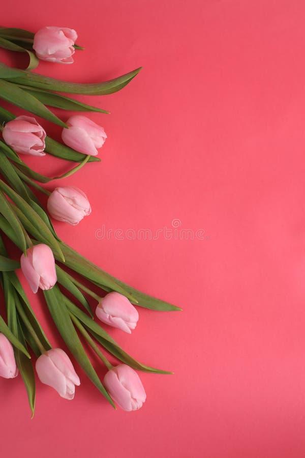 Nove tulipas cor-de-rosa fotografia de stock