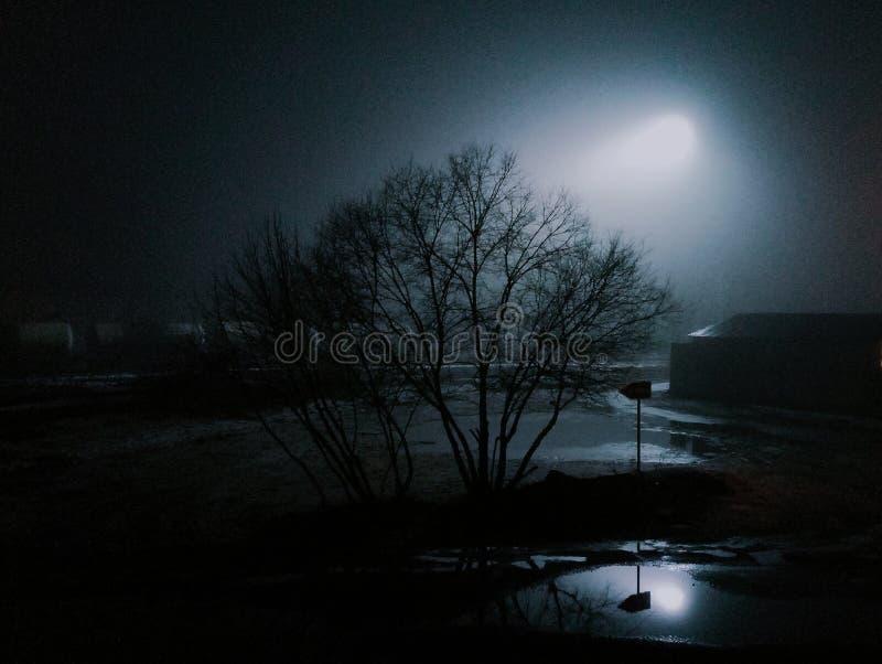 Novela de suspense del árbol de la noche de la atmósfera foto de archivo libre de regalías