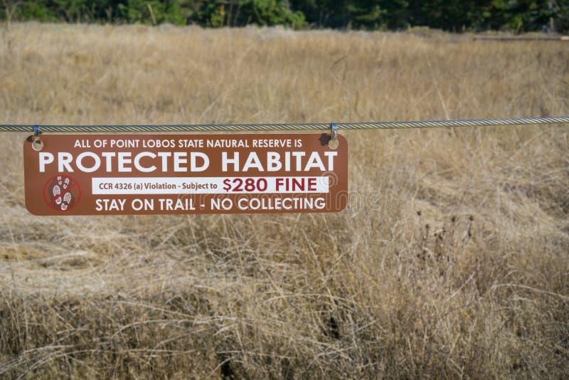 November 5, 2017 Carmel-By-The-Sea/USA - den skyddade livsmiljön, stag på slinga - inget samlande tecken i reserv för punktLobos  arkivfoton