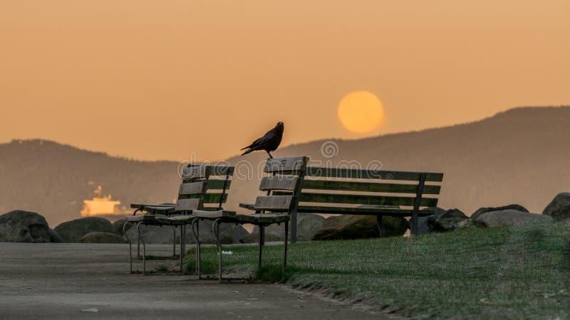 The November full moon morning stock photo