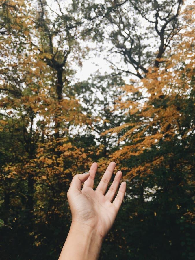 November känsla arkivfoto