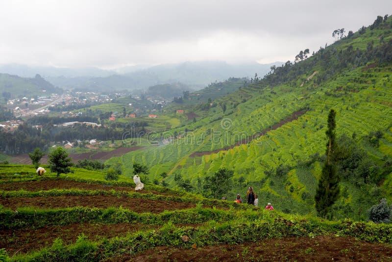 14 November 2018 - Kigali, Rwanda: Terrasvormig landschap in Centraal-Afrika, heuvels van Rwanda stock afbeeldingen