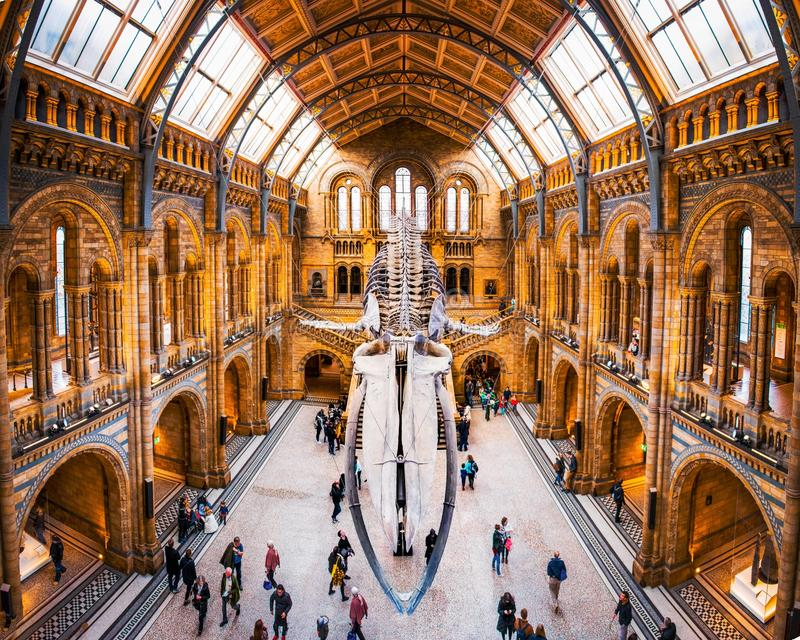 27 November 2017, London, England, National Historic Museum. Front view of a whale skeleton, part of the Whales Exhibition in The royalty free stock image