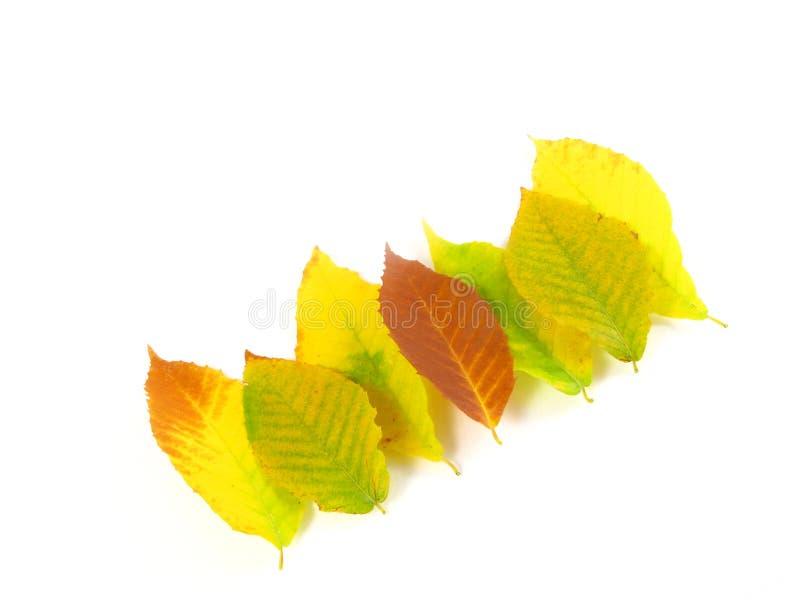 November October Autumn Leaf Foliage Fall Leaves Stock Photo