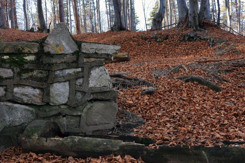November skog arkivfoto