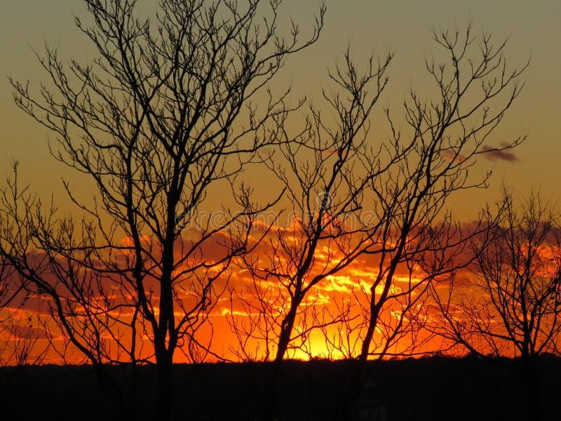 November solnedgång till och med träden royaltyfria bilder