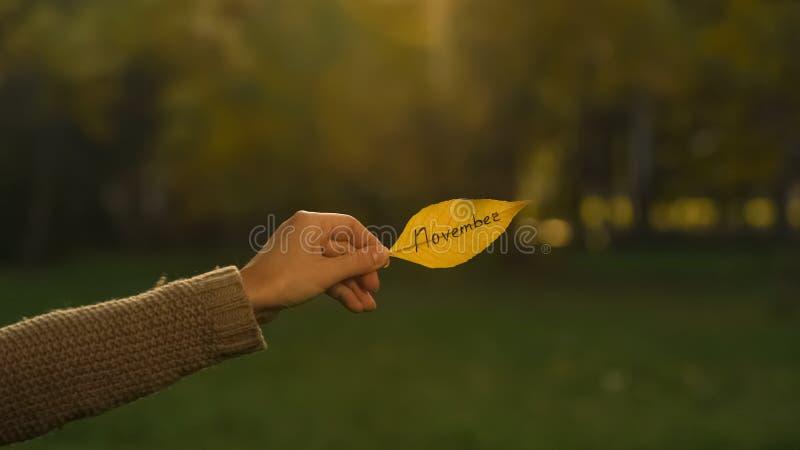 November som är skriftlig på höstbladet, hand som rymmer handstilar, guld- nedgångsäsong arkivbilder