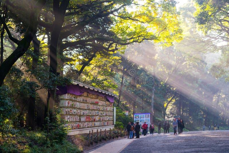 21. November , Tokyo, Japan - Morgen-Sonnenschein/Sun strahlt das Strömen stockfotos