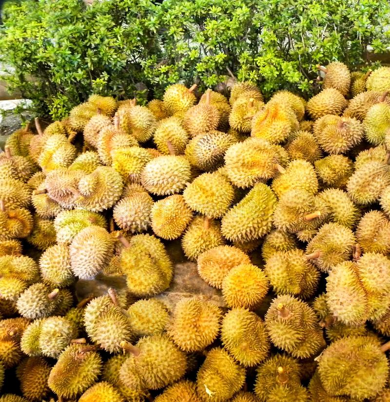 Novembre 2017 - Bangkok, Tailandia - mercato asiatico aperto a Bangkok in cui il Durian fresco è abbondante fotografia stock libera da diritti