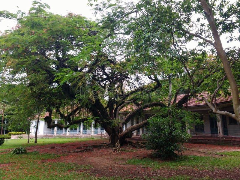 11 novembre 2011, DOS Campos, São Paulo, Brésil, ancien sanatorium Vicentina Aranha de São José photo libre de droits