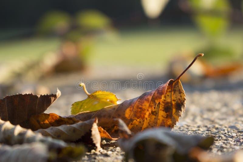 Novembre doux photos stock