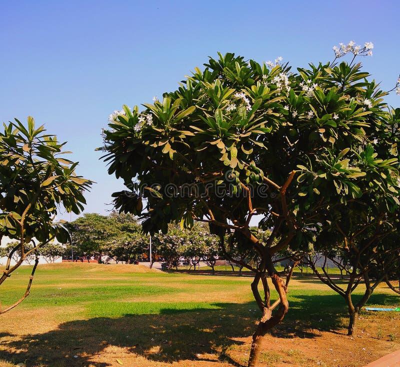 Novembre 2018 giardino dell'albero della magnolia fotografia stock