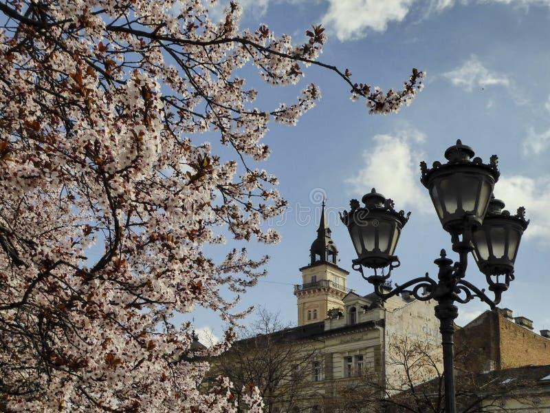 Novi Sad i våren, stadshustorn fotografering för bildbyråer