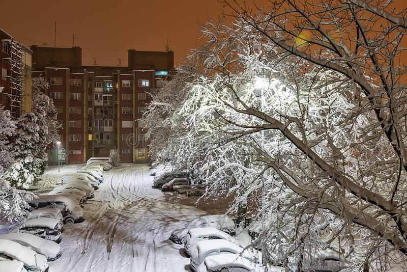 Amazing winter night landscape of snow among snowy trees and shining lights during the snowf royalty free stock photo