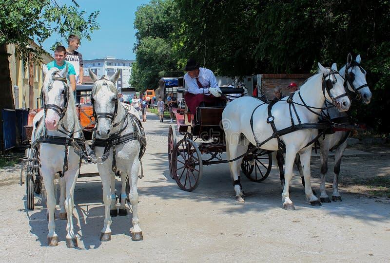 Novi Sad, Serbia, 20 05 2018 jarmark, konie z frachtem zdjęcie stock