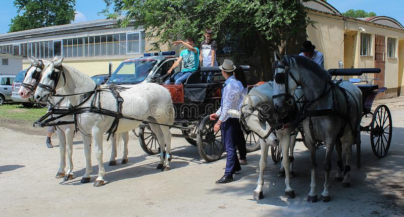 Novi Sad, Serbia, 20 05 2018 jarmark, konie z frachtem zdjęcia royalty free